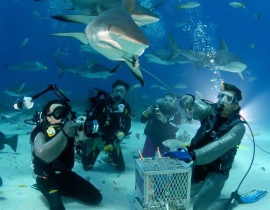 Nassau Shark Diving Close Up Jamaica Cruise Excursions